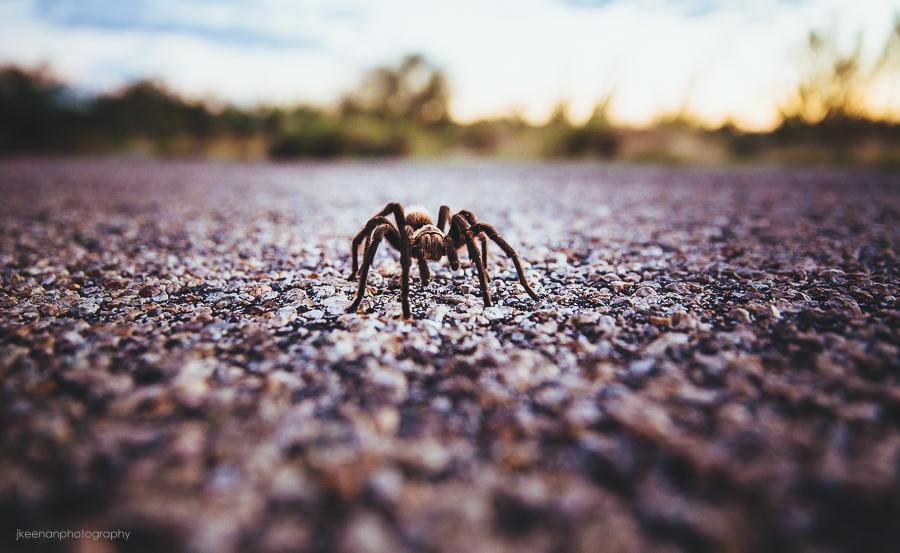 Desert Adventures: Vail, AZ | Grey Matter Life Lens